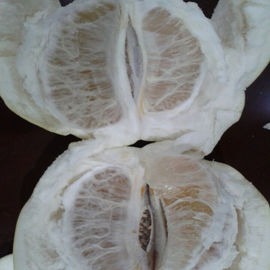 China Chinese Golden Supplier Delicious Fresh Honey Pomelo / Grapefruit With Global GAP Certified factory